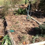 Straw mulch on on the hugelkultured tomato bed