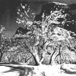 """Half Dome Apple Orchard - Yosemite"", by Ansel Adams --- what's this picture got to do with silver mining stocks?  Nothing... I just like it."